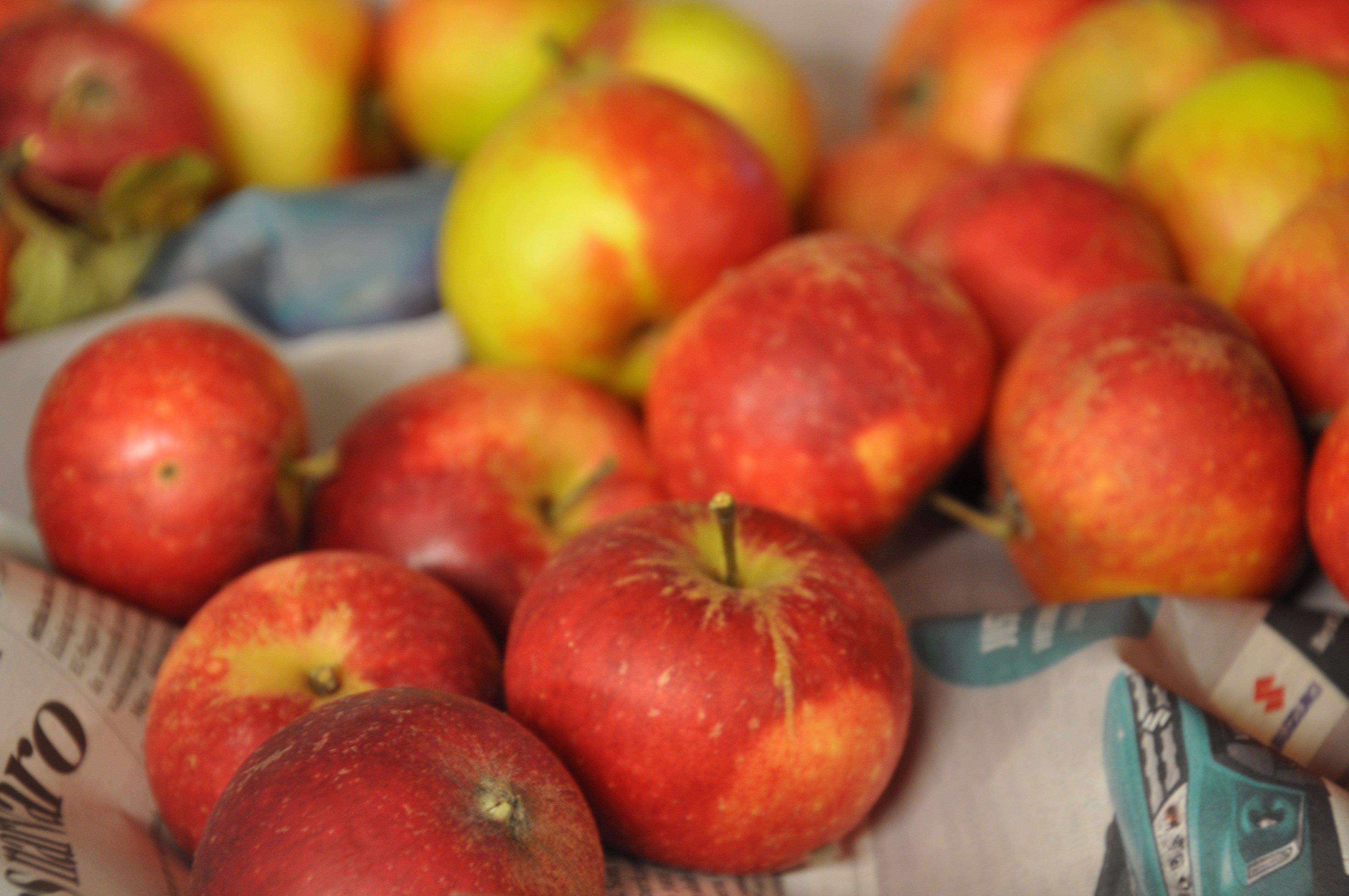 Bengt Berggren och Margareta Bergman sålde äpplen och valnötter från Hammar. Foto: Bengt Grönkvist