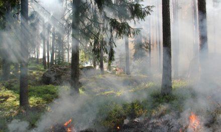 Skogsbranden på Muskö under kontroll