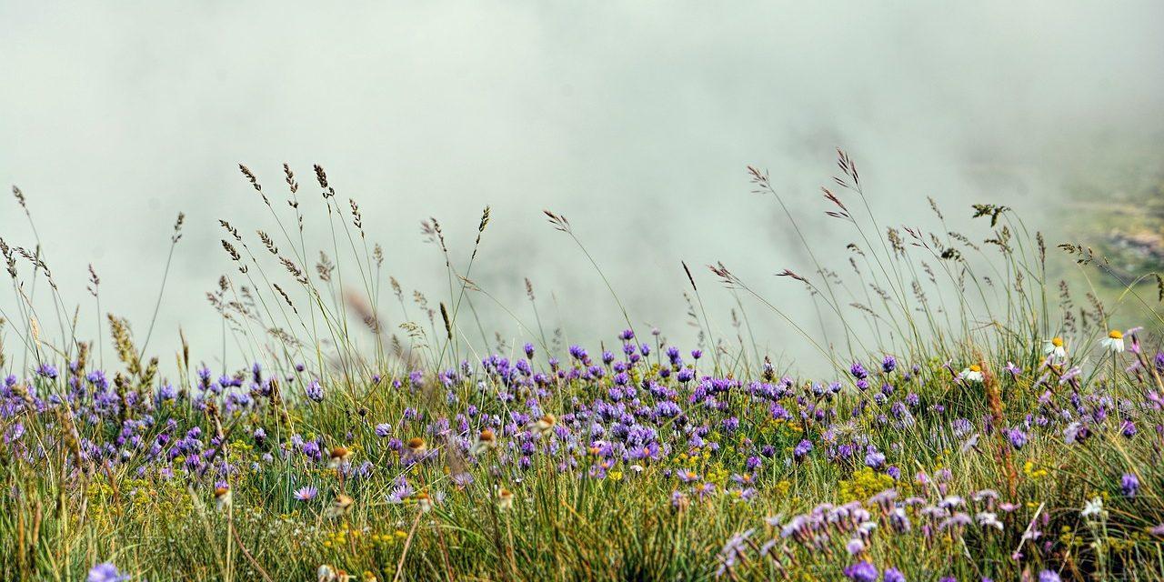 De Vilda Blommornas Dag på Muskö den 20 juni 2021