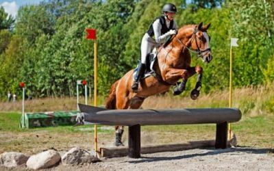 Arbottna Horse Show för sjätte året